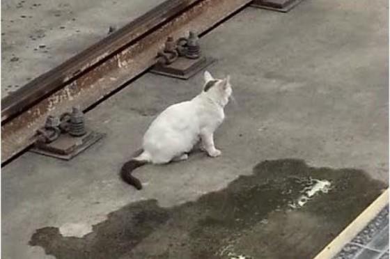 Gato del Metro
